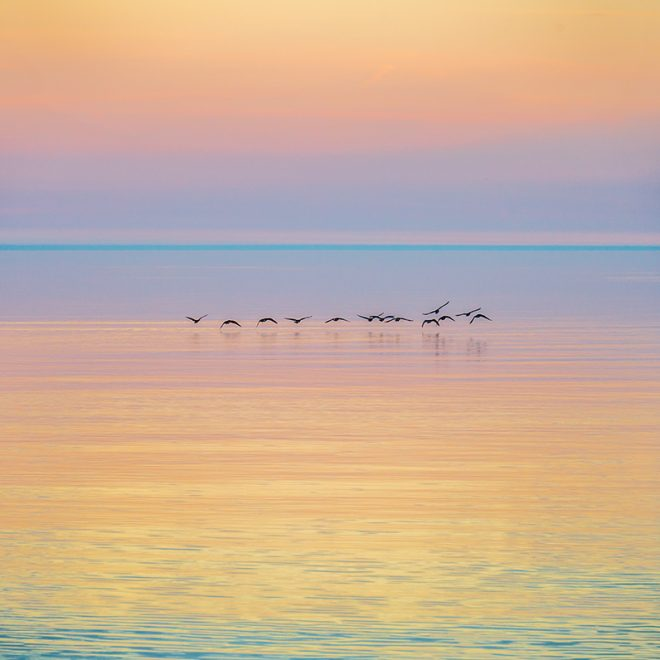 Canada-Geese-at-Dawn-Ted-Glasoe