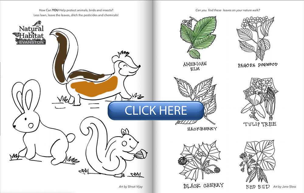 Evanston Loves Nature Coloring Book - Evanston Made