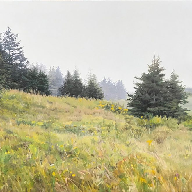 summer-meadow-with-pine